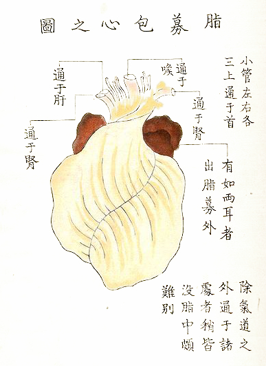 428px-Kawaguchi_p13x