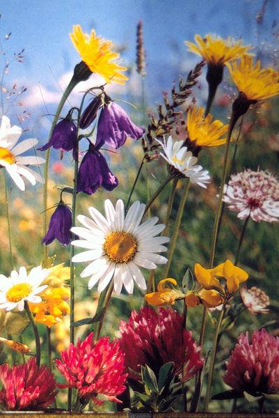 Sommerblumenstrauß, fotografiert in Gelsenkirchen 1975 - A. Gundelach
