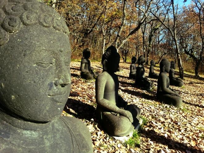 buddha_field