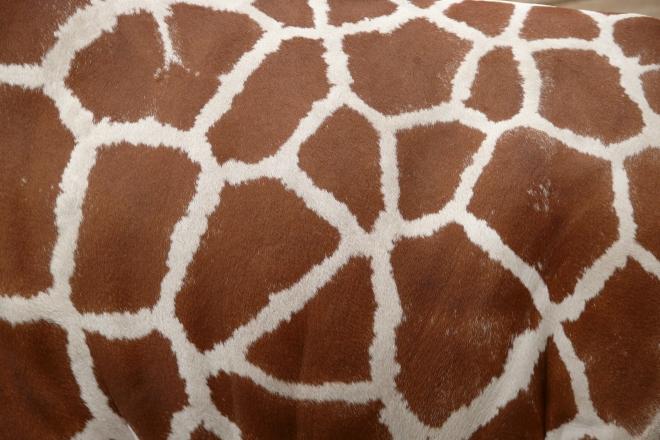 Giraffenfell