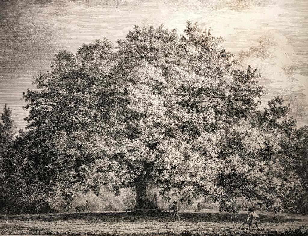 a large old oak tree
